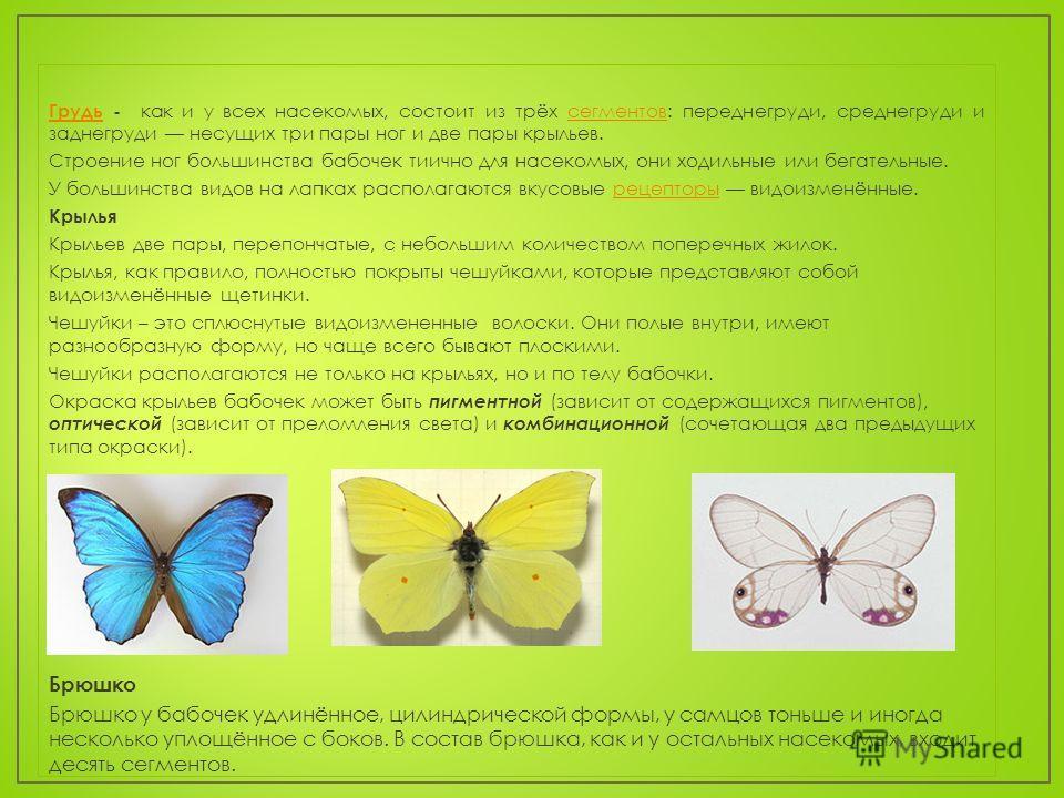 ГрудьГрудь - как и у всех насекомых, состоит из трёх сегментов: переднегруди, среднегруди и заднегруди несущих три пары ног и две пары крыльев.сегментов Строение ног большинства бабочек тиично для насекомых, они ходильные или бегательные. У большинст
