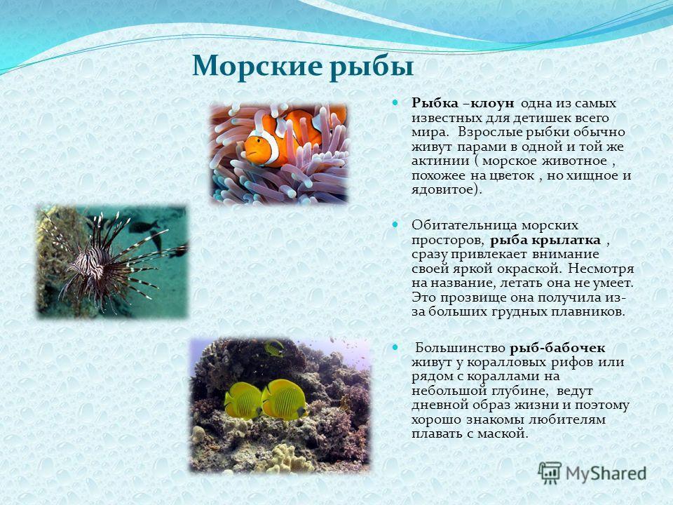 Морские рыбы Рыбка –клоун одна из самых известных для детишек всего мира. Взрослые рыбки обычно живут парами в одной и той же актинии ( морское животное, похожее на цветок, но хищное и ядовитое). Обитательница морских просторов, рыба крылатка, сразу