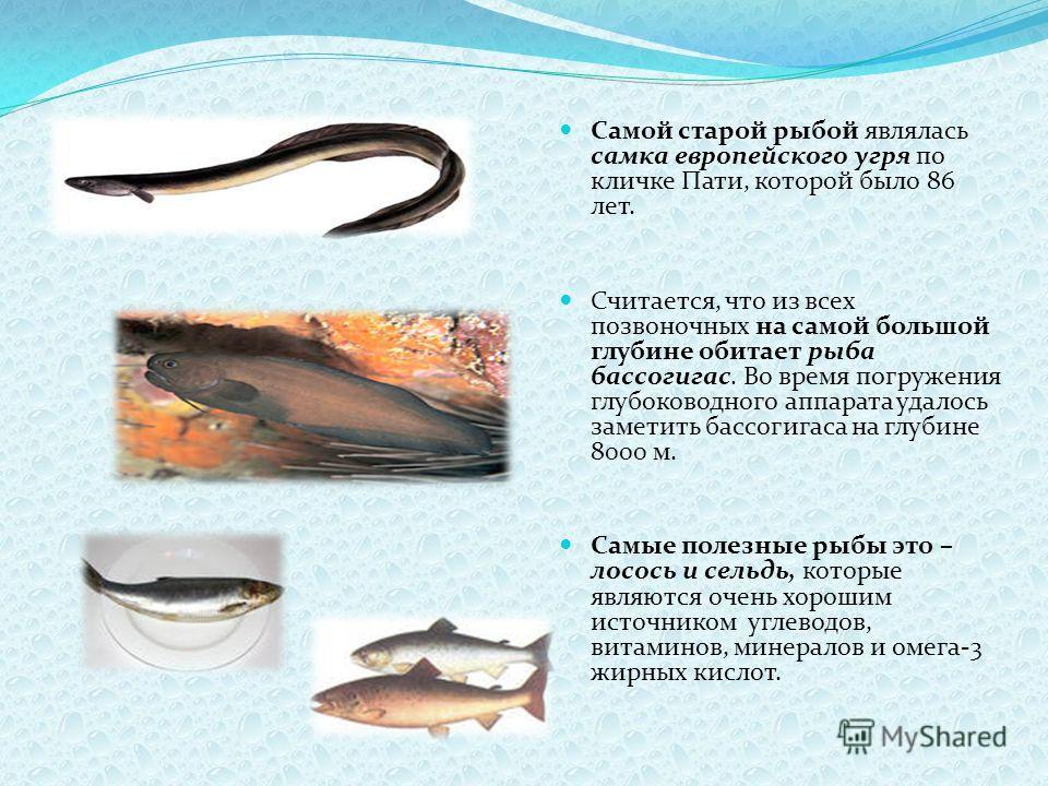 Самой старой рыбой являлась самка европейского угря по кличке Пати, которой было 86 лет. Считается, что из всех позвоночных на самой большой глубине обитает рыба бассогигас. Во время погружения глубоководного аппарата удалось заметить бассогигаса на