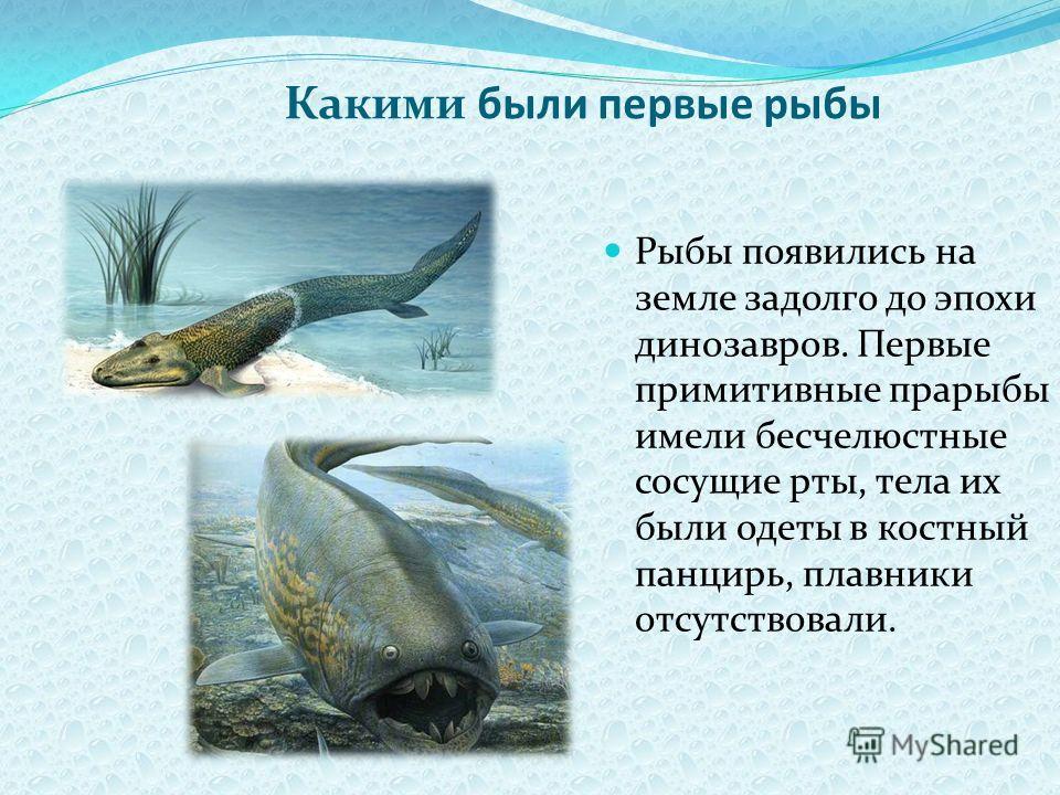 Какими были первые рыбы Рыбы появились на земле задолго до эпохи динозавров. Первые примитивные прарыбы имели бесчелюстные сосущие рты, тела их были одеты в костный панцирь, плавники отсутствовали.