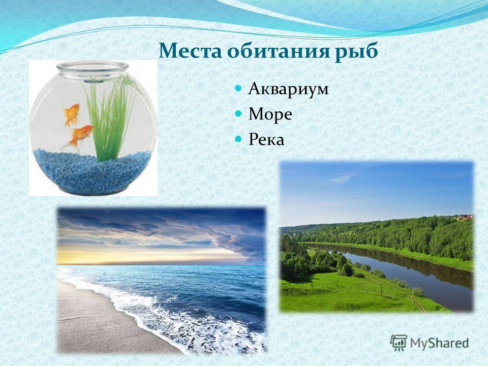 Места обитания рыб Аквариум Море Река