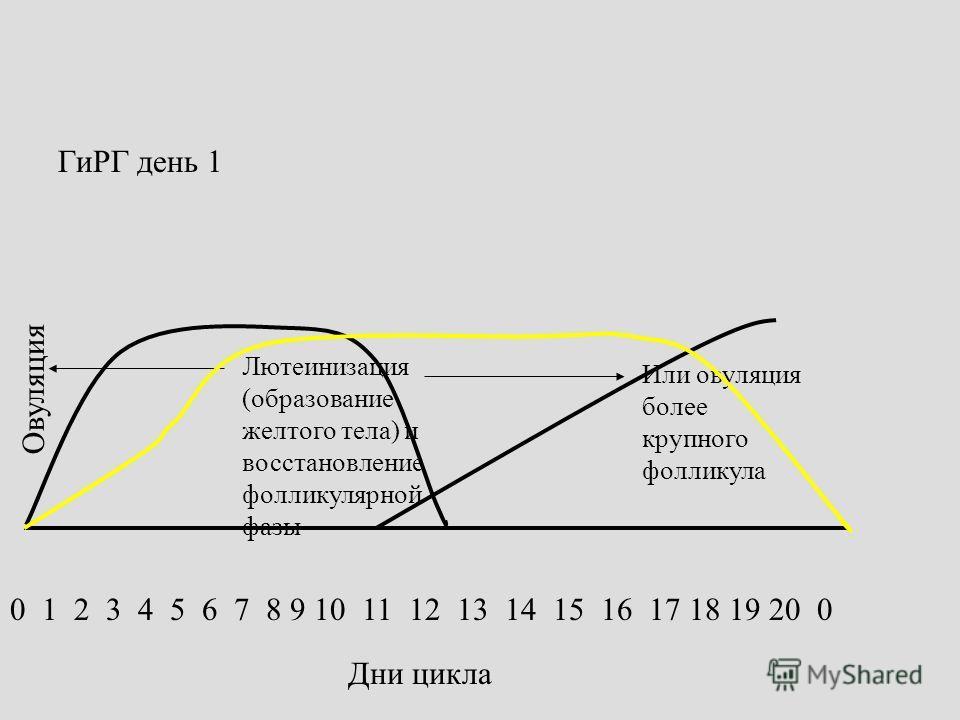 0 1 2 3 4 5 6 7 8 9 10 11 12 13 14 15 16 17 18 19 20 0 Дни цикла ГиРГ день 1 Лютеинизация (образование желтого тела) и восстановление фолликулярной фазы Овуляция Или овуляция более крупного фолликула
