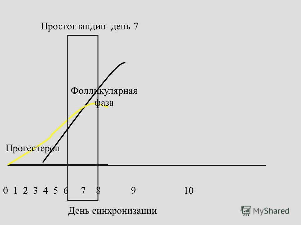 День синхронизации Простогландин день 7 Прогестерон Фолликулярная фаза 0 1 2 3 4 5 6 7 8 9 10