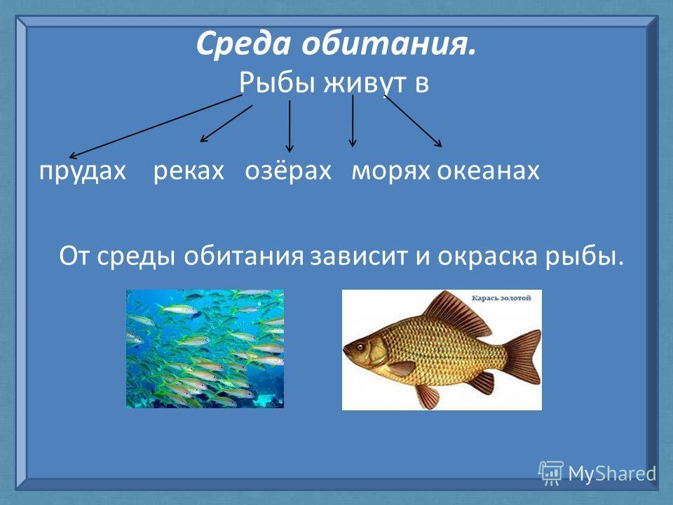 Среда обитания. Рыбы живут в прудах реках озёрах морях океанах От среды обитания зависит и окраска рыбы.