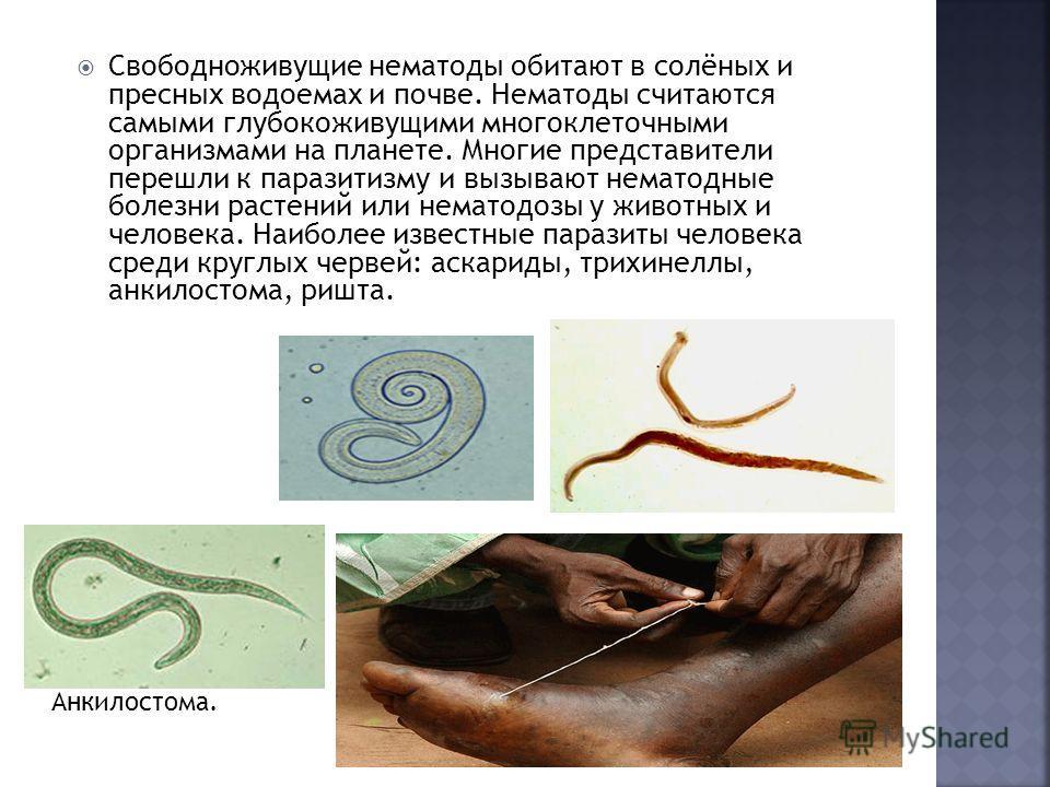 Свободноживущие нематоды обитают в солёных и пресных водоемах и почве. Нематоды считаются самыми глубокоживущими многоклеточными организмами на планете. Многие представители перешли к паразитизму и вызывают нематодные болезни растений или нематодозы