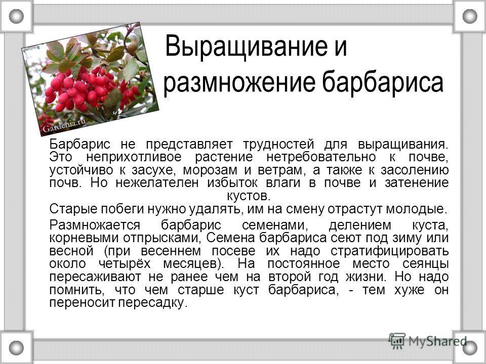 Выращивание и размножение барбариса Барбарис не представляет трудностей для выращивания. Это неприхотливое растение нетребовательно к почве, устойчиво к засухе, морозам и ветрам, а также к засолению почв. Но нежелателен избыток влаги в почве и затене