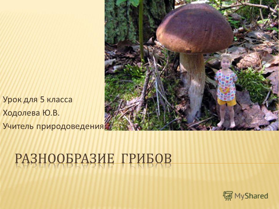 Урок для 5 класса Ходолева Ю. В. Учитель природоведения школы 186
