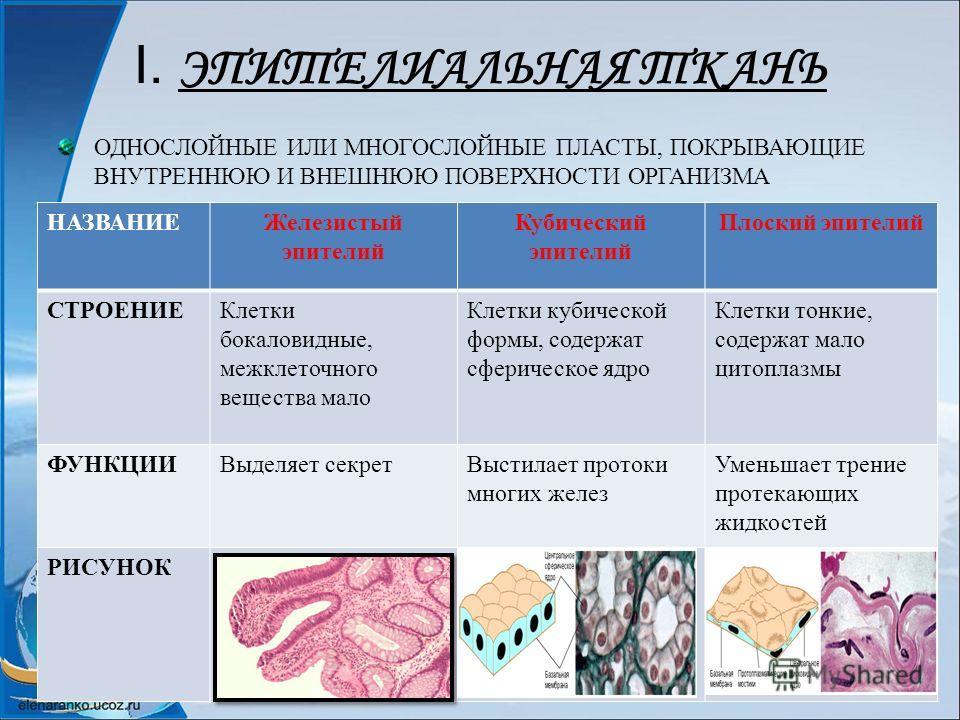 Разработка урока биологии 8 класс по теме система органов размножения