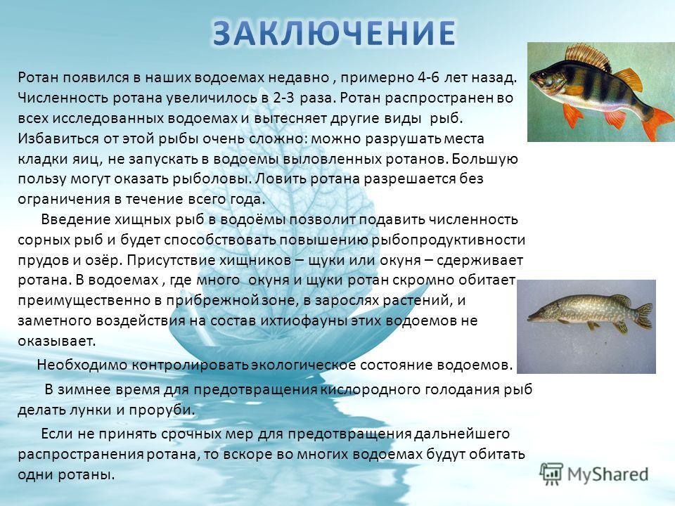 Ротан появился в наших водоемах недавно, примерно 4-6 лет назад. Численность ротана увеличилось в 2-3 раза. Ротан распространен во всех исследованных водоемах и вытесняет другие виды рыб. Избавиться от этой рыбы очень сложно: можно разрушать места кл