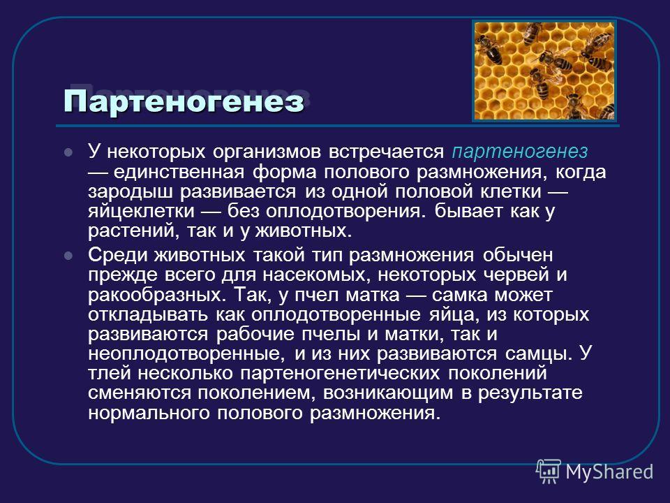 ПартеногенезПартеногенез У некоторых организмов встречается партеногенез единственная форма полового размножения, когда зародыш развивается из одной половой клетки яйцеклетки без оплодотворения. бывает как у растений, так и у животных. Среди животных
