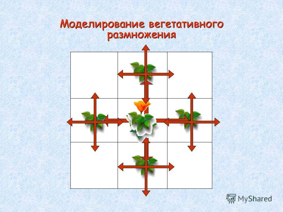 Моделирование вегетативного размножения