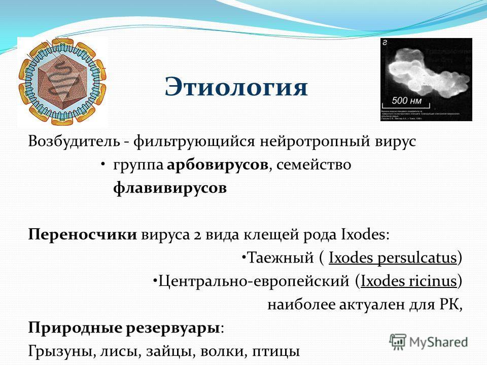 Этиология Возбудитель - фильтрующийся нейротропный вирус группа арбовирусов, семейство флавивирусов Переносчики вируса 2 вида клещей рода Ixodes: Таежный ( Ixodes persulcatus) Центрально-европейский (Ixodes ricinus) наиболее актуален для РК, Природны
