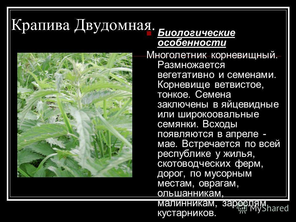 Крапива Двудомная. Биологические особенности Многолетник корневищный. Размножается вегетативно и семенами. Корневище ветвистое, тонкое. Семена заключены в яйцевидные или широкоовальные семянки. Всходы появляются в апреле - мае. Встречается по всей ре