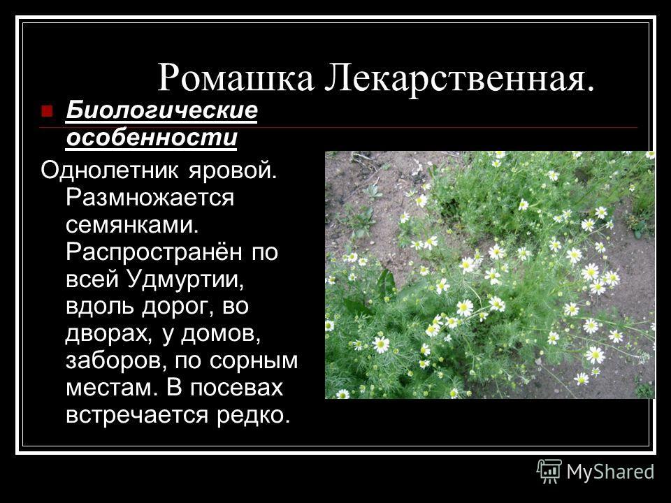 Ромашка Лекарственная. Биологические особенности Однолетник яровой. Размножается семянками. Распространён по всей Удмуртии, вдоль дорог, во дворах, у домов, заборов, по сорным местам. В посевах встречается редко.