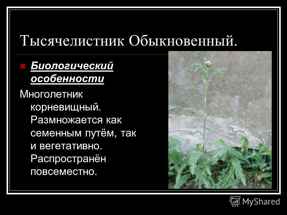 Тысячелистник Обыкновенный. Биологический особенности Многолетник корневищный. Размножается как семенным путём, так и вегетативно. Распространён повсеместно.