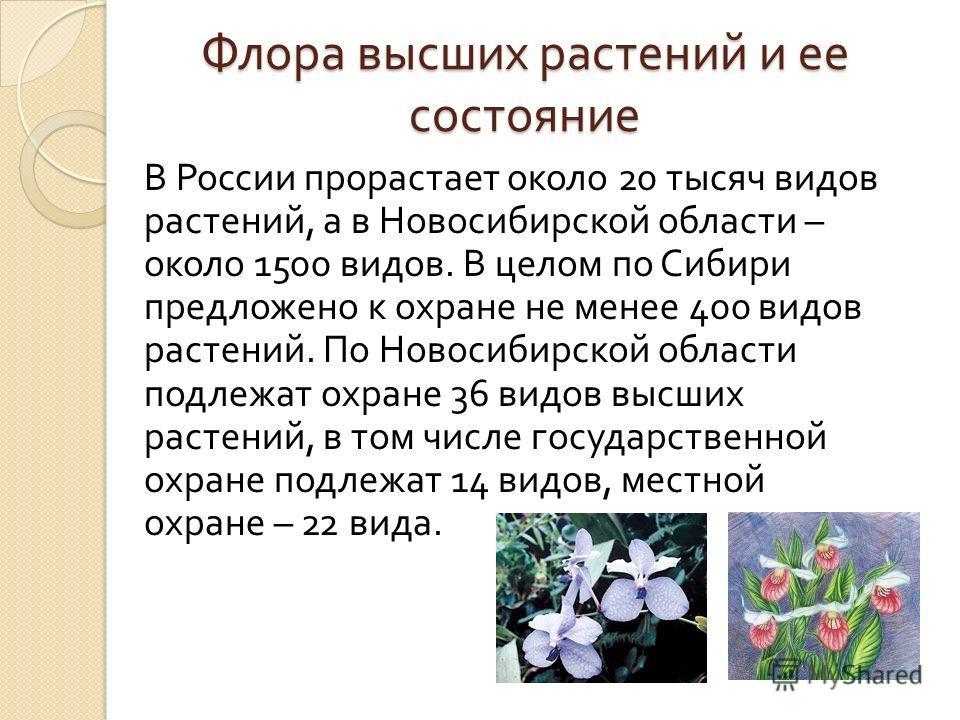 Флора высших растений и ее состояние В России прорастает около 20 тысяч видов растений, а в Новосибирской области – около 1500 видов. В целом по Сибири предложено к охране не менее 400 видов растений. По Новосибирской области подлежат охране 36 видов