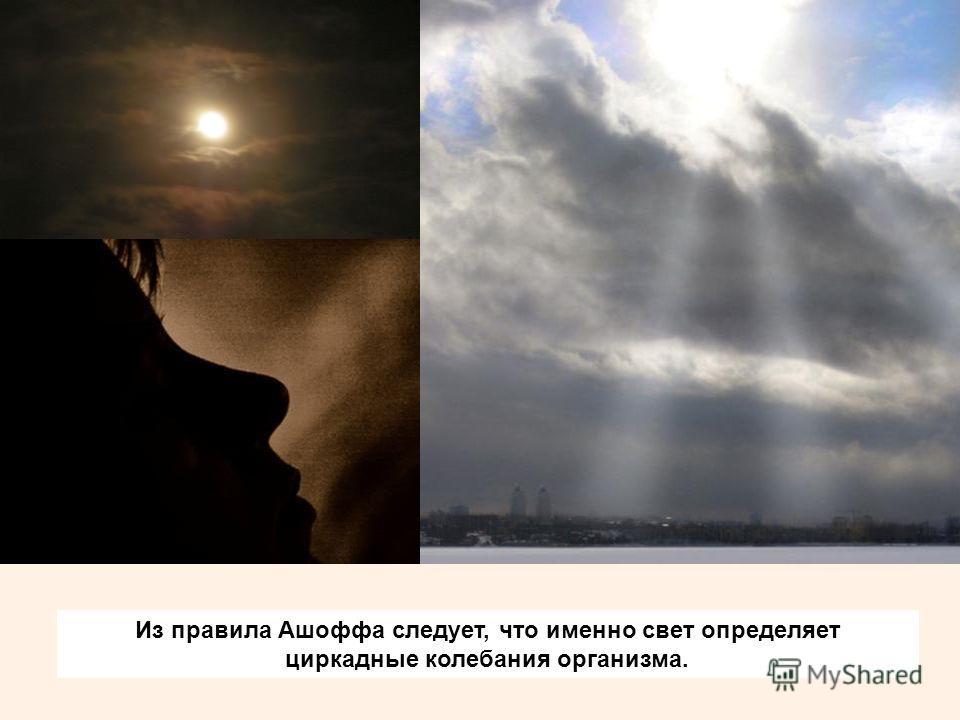 Из правила Ашоффа следует, что именно свет определяет циркадные колебания организма.