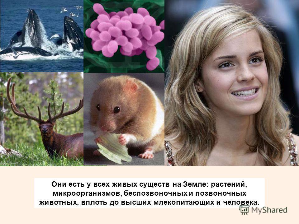 Они есть у всех живых существ на Земле: растений, микроорганизмов, беспозвоночных и позвоночных животных, вплоть до высших млекопитающих и человека.