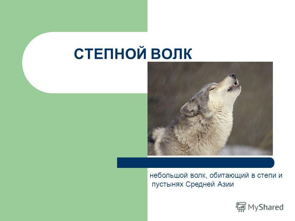 СТЕПНОЙ ВОЛК небольшой волк, обитающий в степи и пустынях Средней Азии