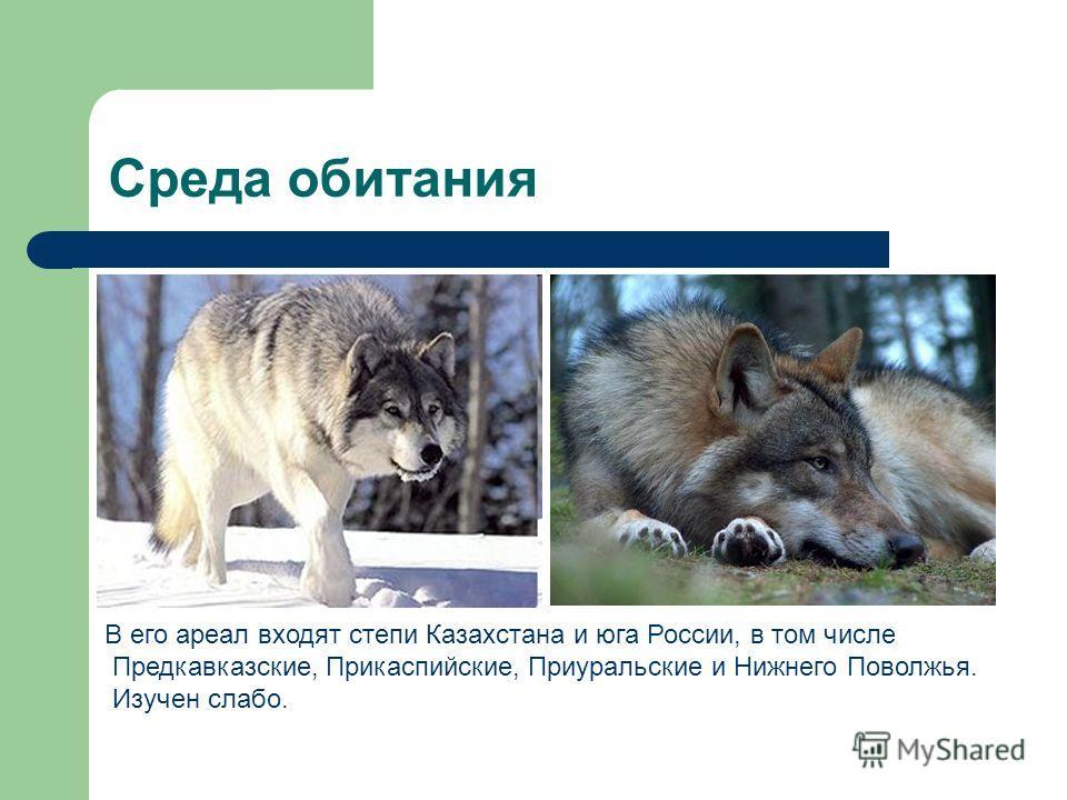 Среда обитания В его ареал входят степи Казахстана и юга России, в том числе Предкавказские, Прикаспийские, Приуральские и Нижнего Поволжья. Изучен слабо.
