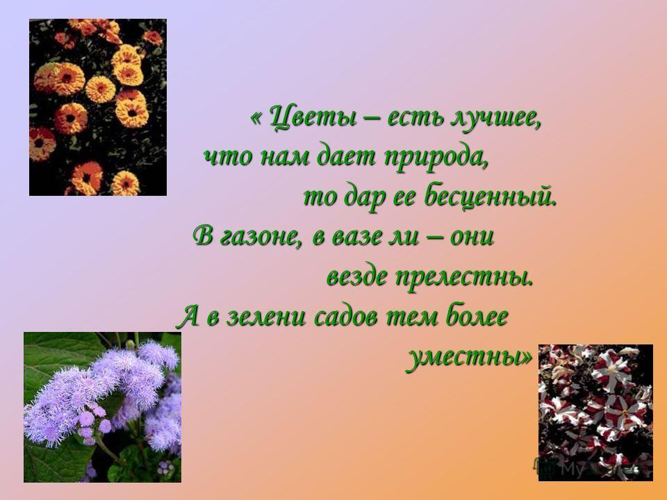 « Цветы – есть лучшее, что нам дает природа, что нам дает природа, то дар ее бесценный. то дар ее бесценный. В газоне, в вазе ли – они везде прелестны. везде прелестны. А в зелени садов тем более уместны» уместны»