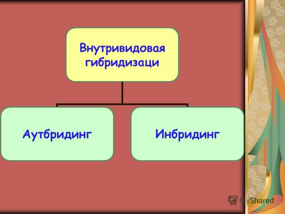 Внутривидовая гибридизаци АутбридингИнбридинг