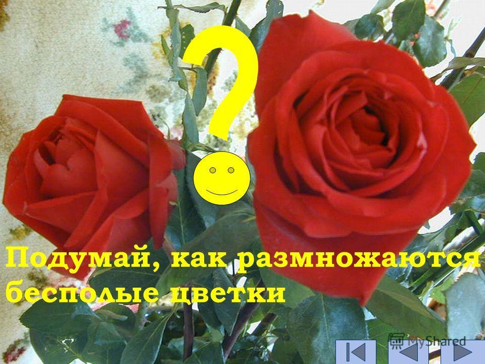 Подумай, как размножаются бесполые цветки
