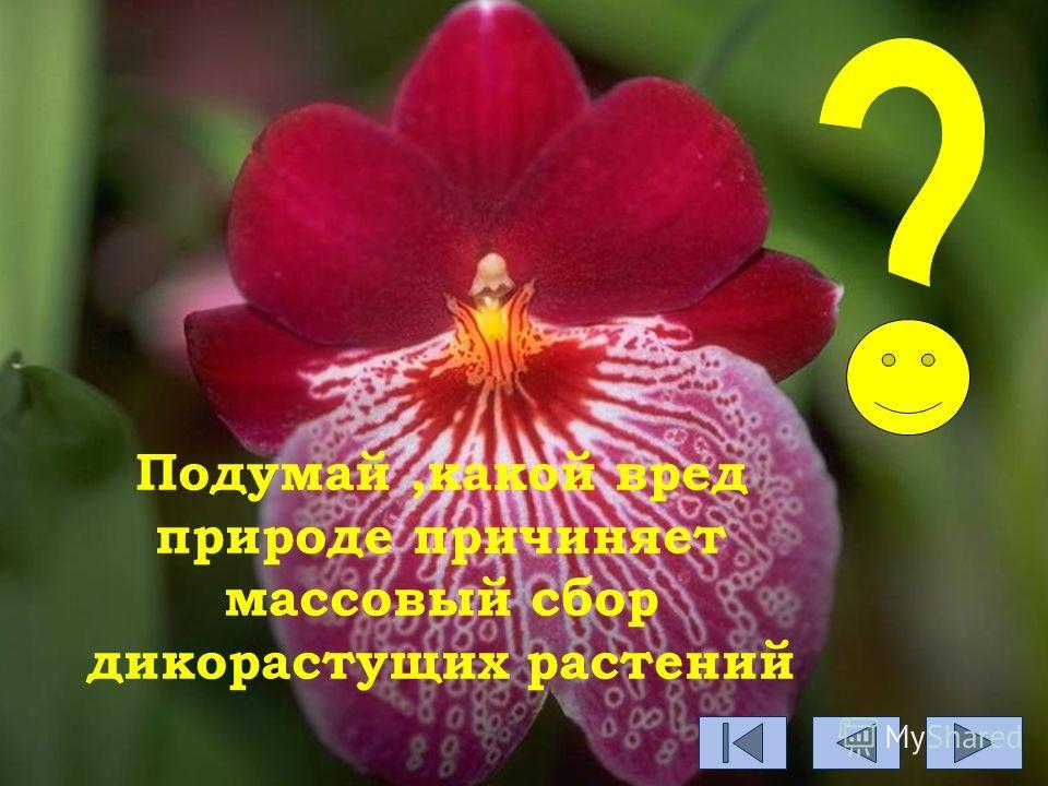 Подумай,какой вред природе причиняет массовый сбор дикорастущих растений