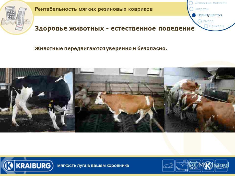 Здоровье животных - естественное поведение Необходимая подвижность будет восстановлена. Подвижность, необходимая коровам для достижения функциональных зон за пределами боксов ради удовлетворения своих потребностей, помогает полностью задействовать их