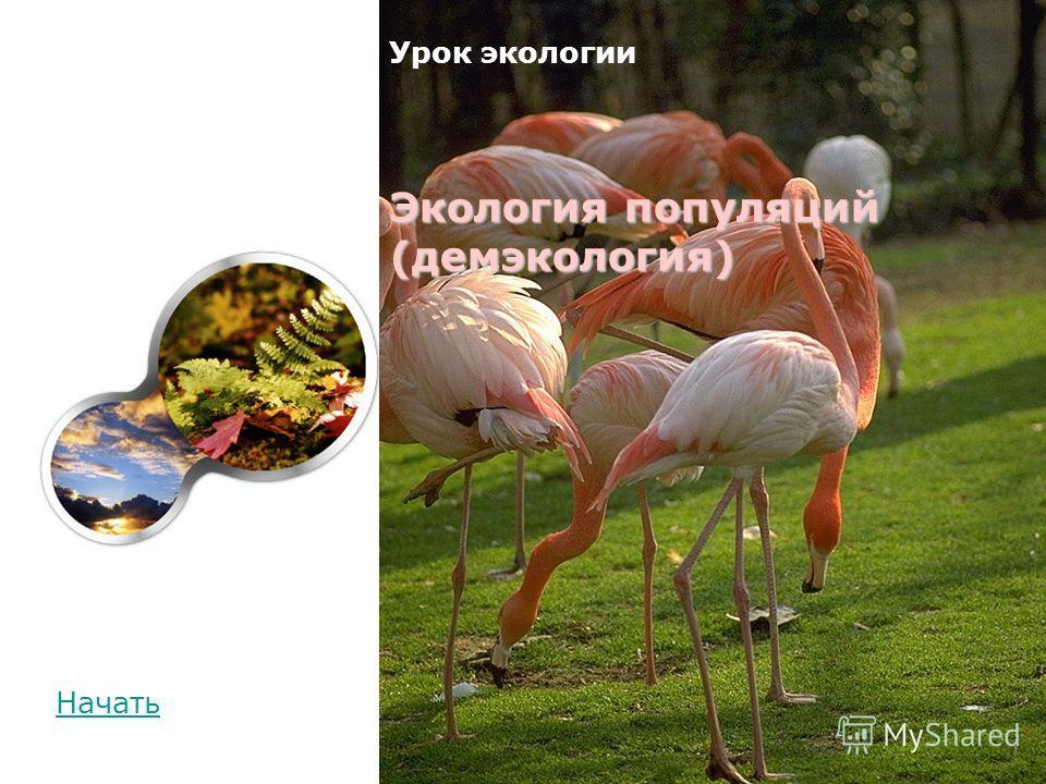Начать Экология популяций (демэкология) Урок экологии Экология популяций (демэкология)