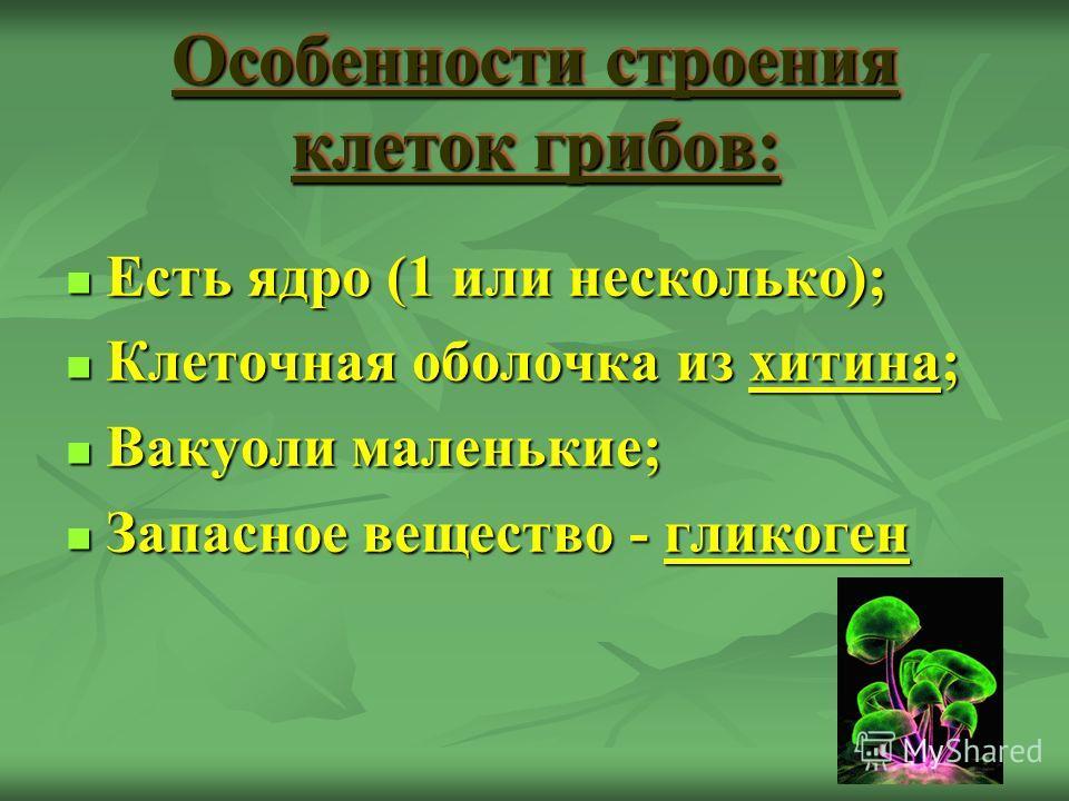 Особенности строения клеток грибов: Есть ядро (1 или несколько); Есть ядро (1 или несколько); Клеточная оболочка из хитина; Клеточная оболочка из хитина; Вакуоли маленькие; Вакуоли маленькие; Запасное вещество - гликоген Запасное вещество - гликоген