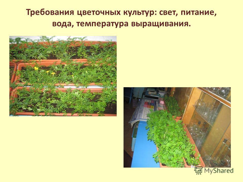 Требования цветочных культур: свет, питание, вода, температура выращивания.