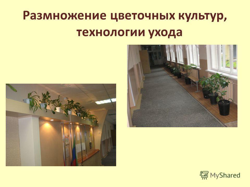 Размножение цветочных культур, технологии ухода