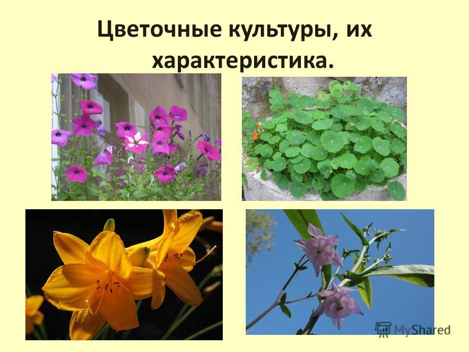 Цветочные культуры, их характеристика.