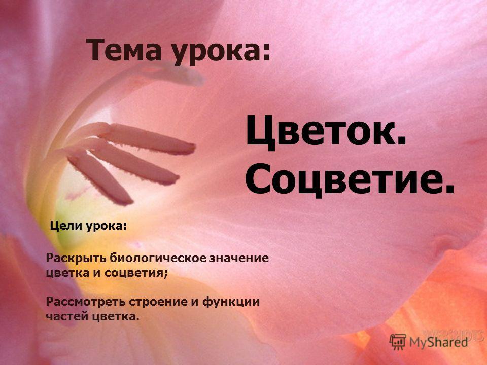 Тема урока Цветок. Соцветие Тема урока: Цветок. Соцветие. Цели урока: Раскрыть биологическое значение цветка и соцветия; Рассмотреть строение и функции частей цветка.