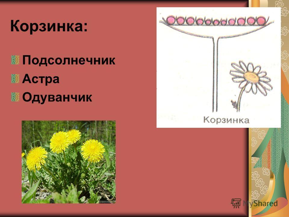 Корзинка: Подсолнечник Астра Одуванчик