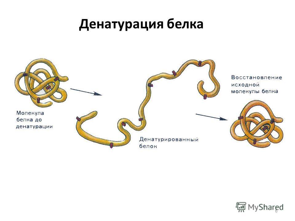 наблюдение изучение свойств белков свертывание белков того чтобы