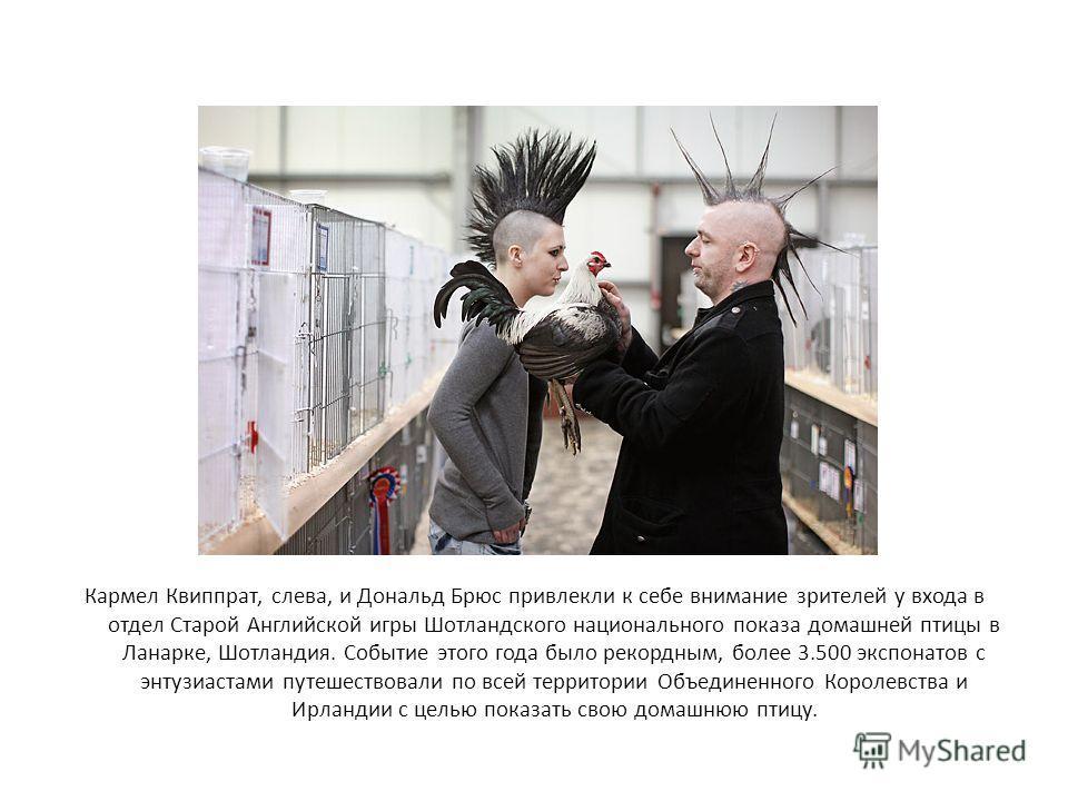Кармел Квиппрат, слева, и Дональд Брюс привлекли к себе внимание зрителей у входа в отдел Старой Английской игры Шотландского национального показа домашней птицы в Ланарке, Шотландия. Событие этого года было рекордным, более 3.500 экспонатов с энтузи