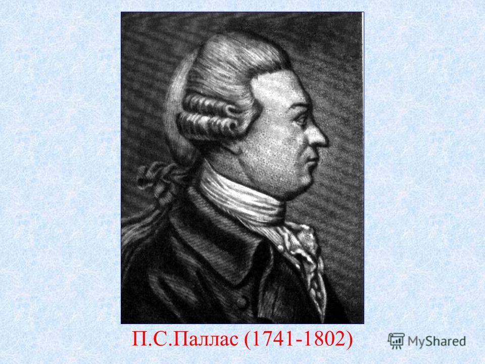П.С.Паллас (1741-1802)