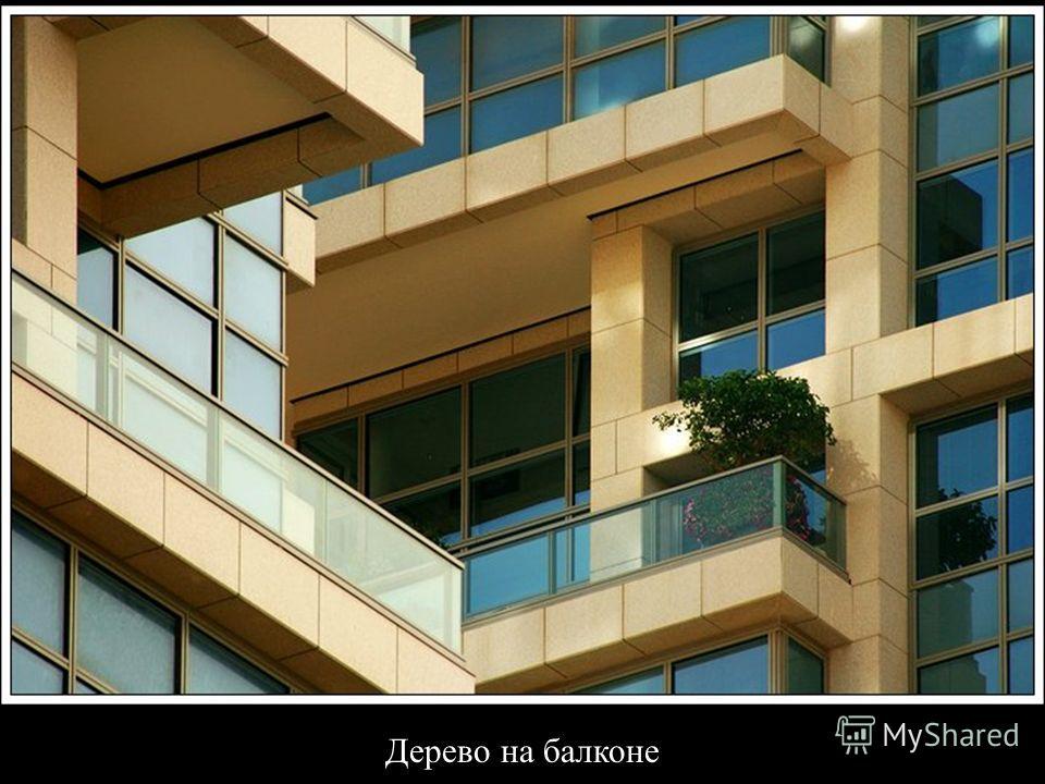 Дерево на балконе