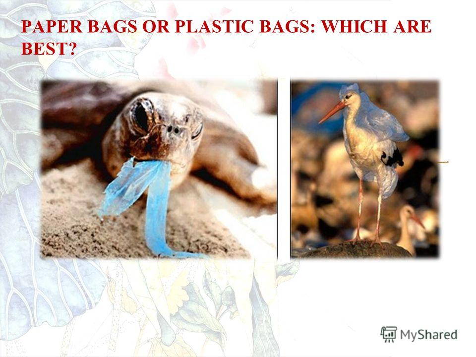 PAPER BAGS OR PLASTIC BAGS: WHICH ARE BEST?