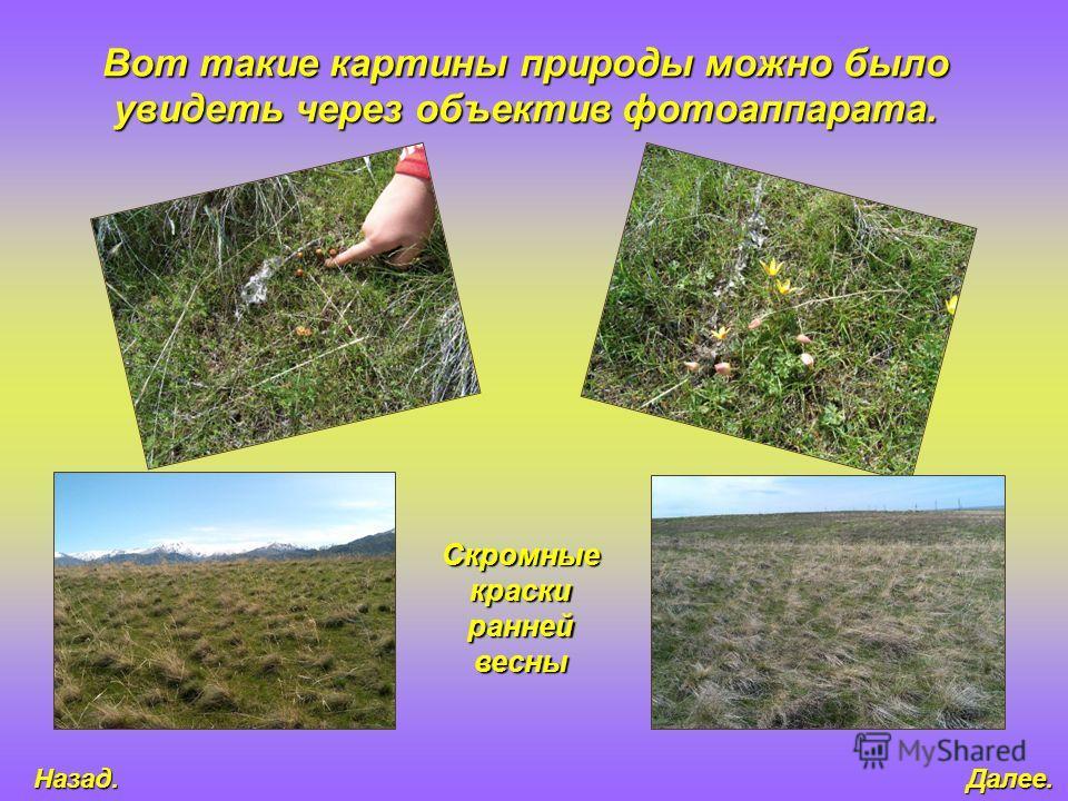 Вот такие картины природы можно было увидеть через объектив фотоаппарата. Скромные краски ранней весны Далее. Назад.
