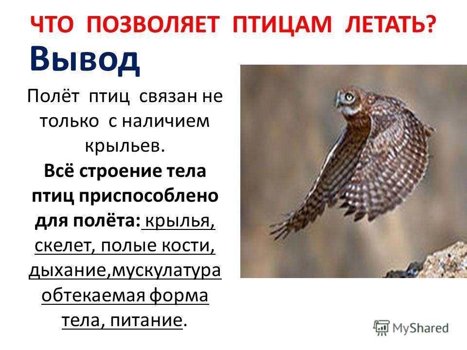 Вывод Полёт птиц связан не только с наличием крыльев. Всё строение тела птиц приспособлено для полёта: крылья, скелет, полые кости, дыхание,мускулатура обтекаемая форма тела, питание.