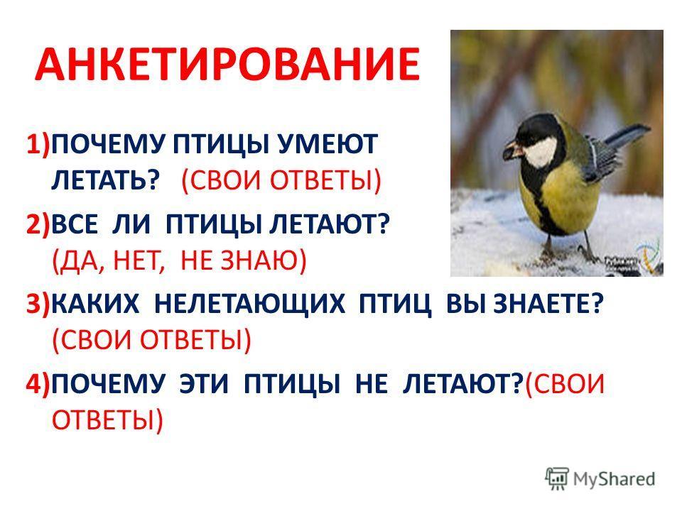 АНКЕТИРОВАНИЕ 1)ПОЧЕМУ ПТИЦЫ УМЕЮТ ЛЕТАТЬ? (СВОИ ОТВЕТЫ) 2)ВСЕ ЛИ ПТИЦЫ ЛЕТАЮТ? (ДА, НЕТ, НЕ ЗНАЮ) 3)КАКИХ НЕЛЕТАЮЩИХ ПТИЦ ВЫ ЗНАЕТЕ? (СВОИ ОТВЕТЫ) 4)ПОЧЕМУ ЭТИ ПТИЦЫ НЕ ЛЕТАЮТ?(СВОИ ОТВЕТЫ)