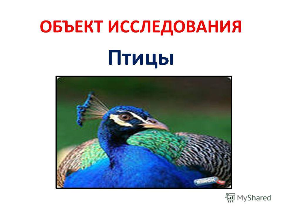 ОБЪЕКТ ИССЛЕДОВАНИЯ Птицы