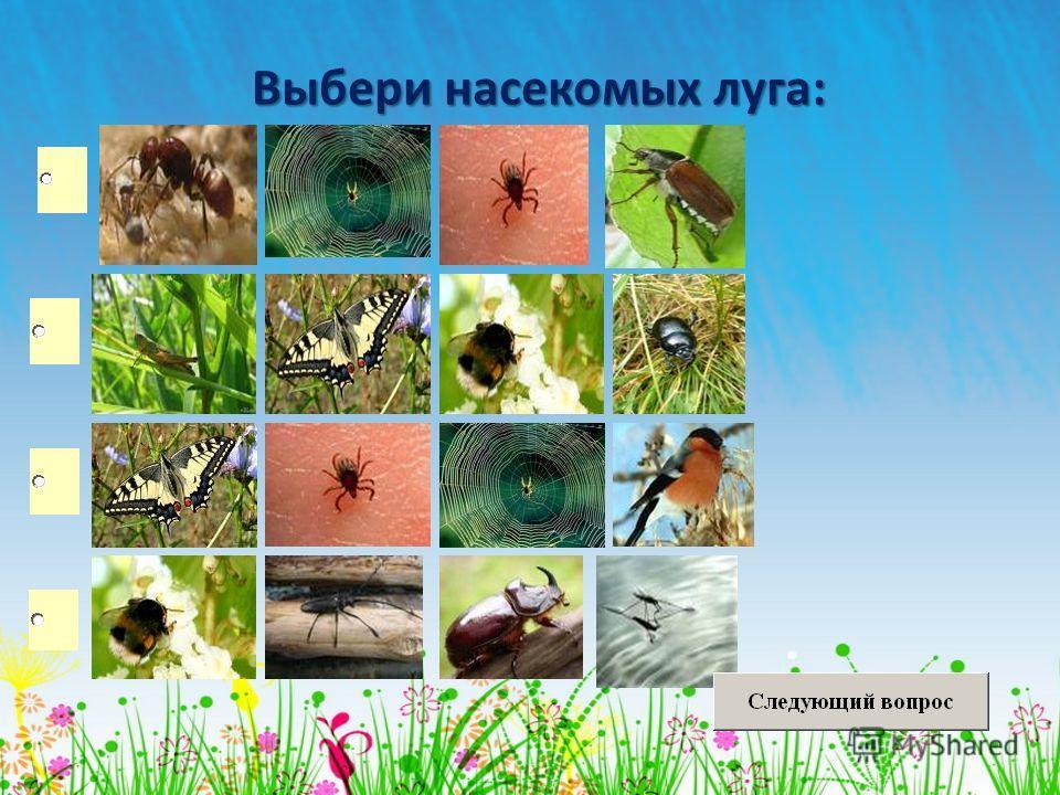Выбери насекомых луга: