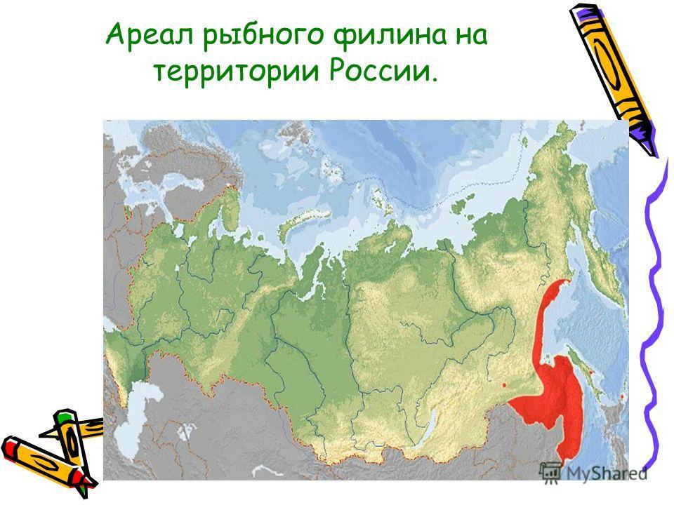 Ареал рыбного филина на территории России.