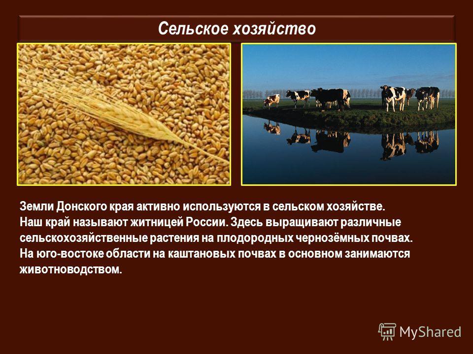 Сельское хозяйство Земли Донского края активно используются в сельском хозяйстве. Наш край называют житницей России. Здесь выращивают различные сельскохозяйственные растения на плодородных чернозёмных почвах. На юго-востоке области на каштановых почв