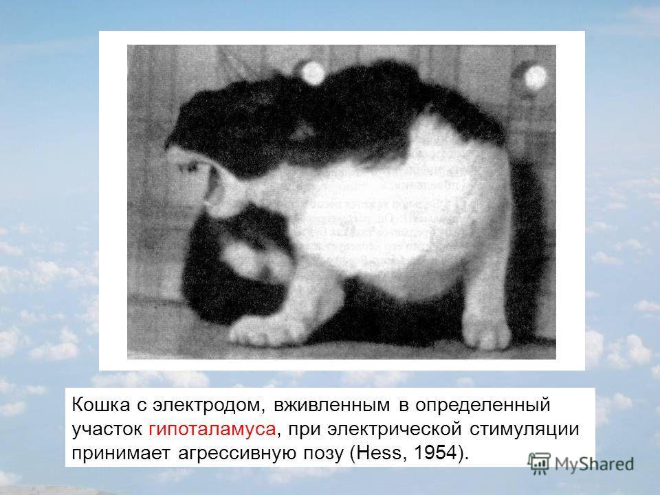 Кошка с электродом, вживленным в определенный участок гипоталамуса, при электрической стимуляции принимает агрессивную позу (Hess, 1954).