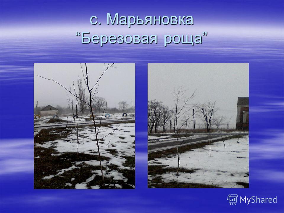 с. МарьяновкаБерезовая роща